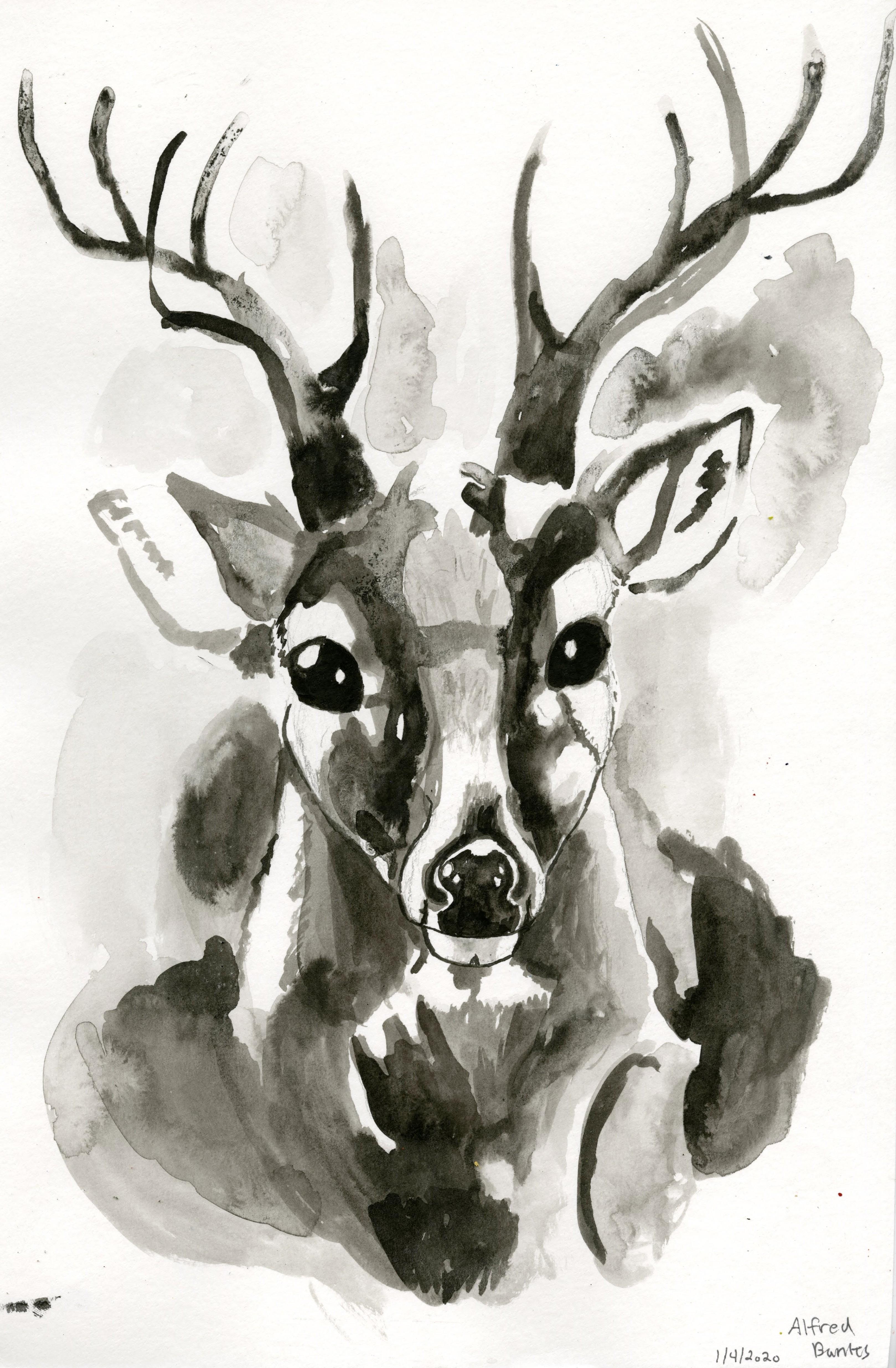 AB_Deer298 (1)