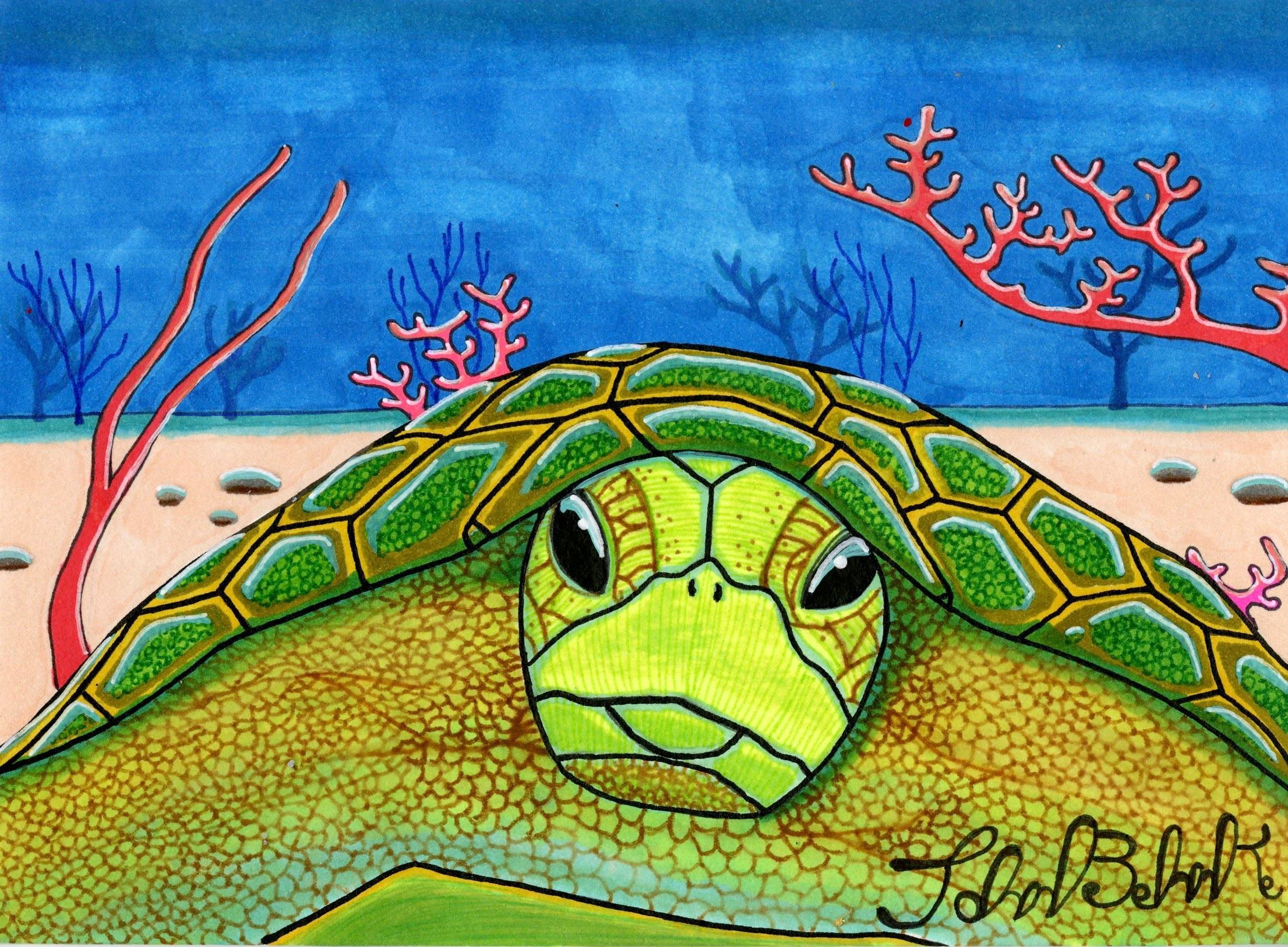 """Sea Turtle"" by John Behnke"