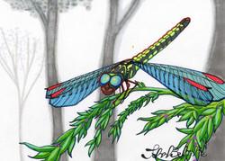 """""""Dragonfly"""" by John Behnke"""