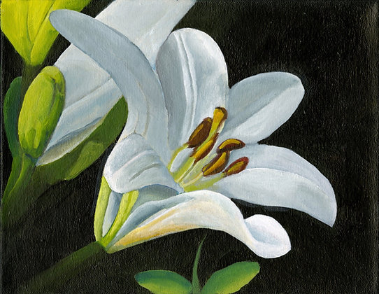 """""""White Lily"""" by Alfred Banks"""