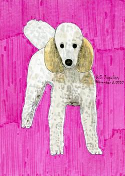 """""""Standard Poodle"""" by RJ Juguilon"""
