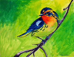 """Colorful Bird"" by David Hence"