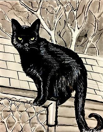 """Black Cat"" by David Hence"