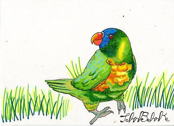 """""""Parrot in Grass"""" by John Behnke"""