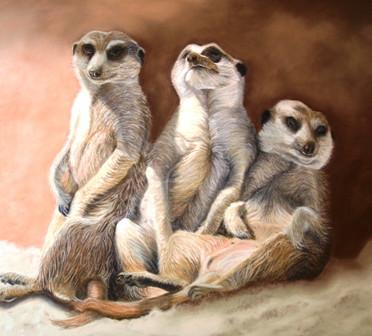 new meerkats sw.jpeg