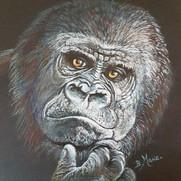 gorilla 10 sw - Copy.jpg