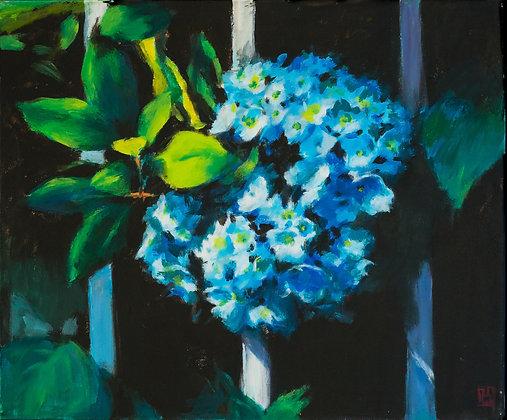Blue Hydrangea - 178JK20