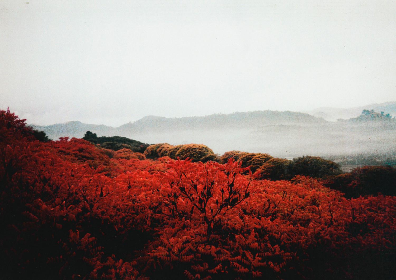 El Mar Rojo