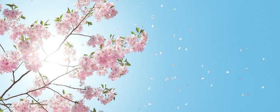 Cherry%2520Blossom%2520Website%2520Banne
