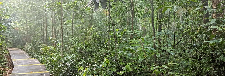 Forest%20Board%20Walk%20Banner%20Service
