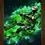 Thumbnail: 1820 - Quadro com moldura Counter-Strike