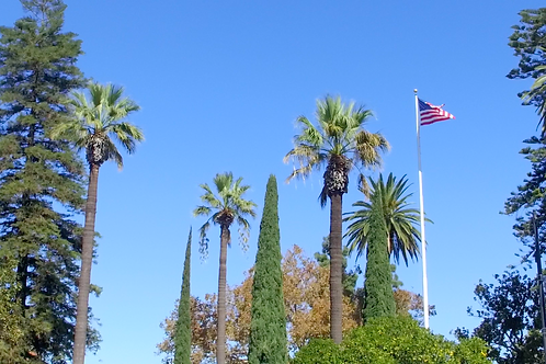 Trees and Flag about Plaza in Old Towne Orange