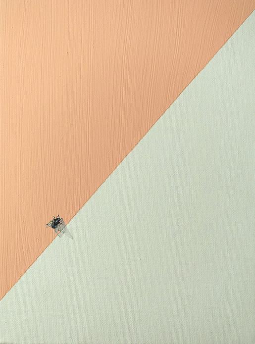 Fliege auf Apricot, 24x18cm, 2020, Ölfarbe / Wandfarbe auf Malpappe