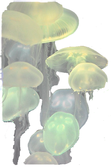 jelly22_edited_edited_edited.png