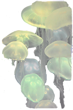 jelly22_edited_edited.png