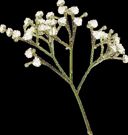 817-8171872_flower-images-transparent-fl