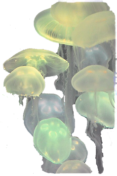 jelly22_edited.png