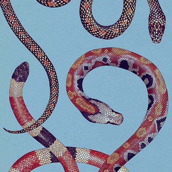 Snake background