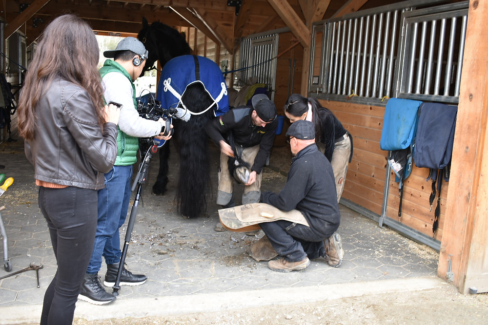 Tyler Wiberg demonstrating how to clean the hoof
