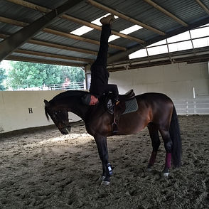 Steve Wiberg on Lazur a triple Grand Prix winner 2016 of Blanchette Equestrian doing a handstand on horseback