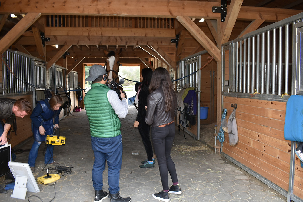 Dr. Kelley setting up the X-ray, demonstrating how Vets and Steve work together to keep horses hooves healthy