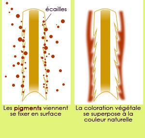 Connaissez-vous les différences entre la coloration végétale et la coloration chimique?