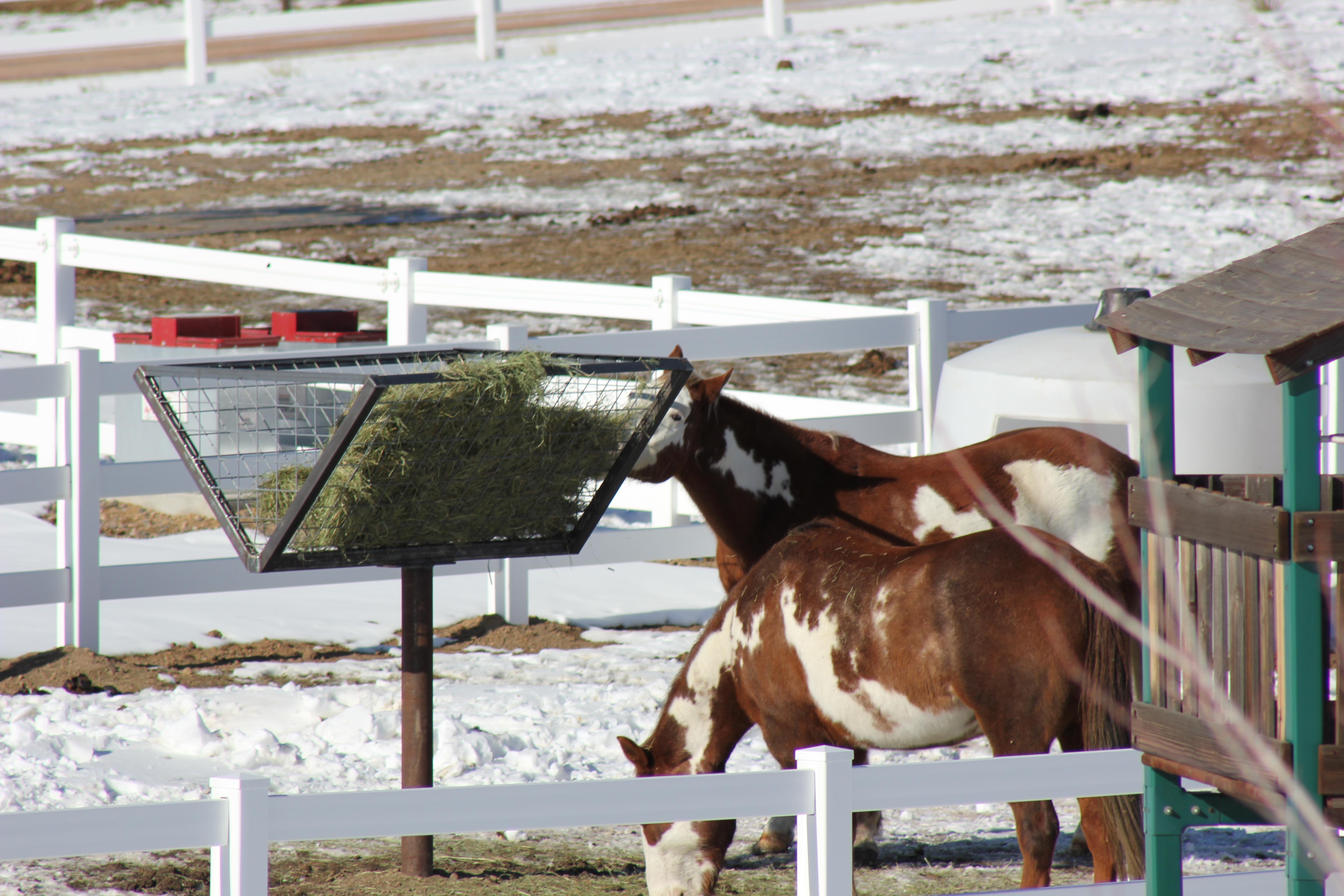 Horse Feeders
