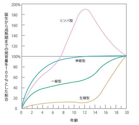 スキャモンの発育曲線.jpg