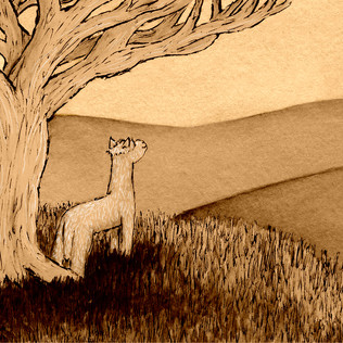 Children's Illustrations: 'An Alpaca's Reflection'