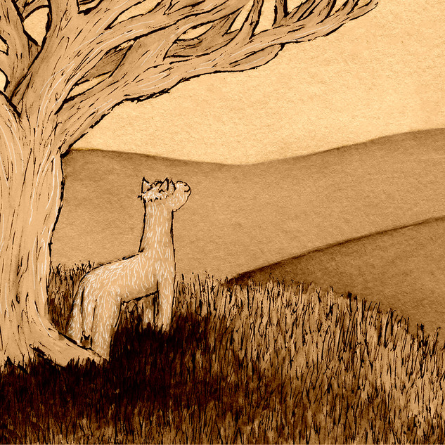 Children's Illustrations: 'An Alpaca's Reflection'