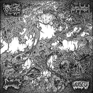 Oxalate/Perpetuated/Vivisect/Blood Spore Split