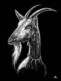 Night Goat