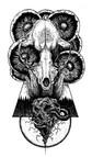 Raccoon Skull copy.jpg