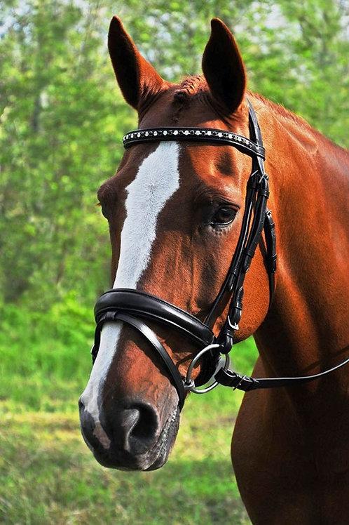 Red Barn Cadence Bridle 51060