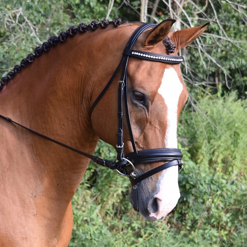 BLACK OAK LARKSPUR BRIDLE 11150