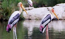 south india wildlife tour packages, wildlife package in south india