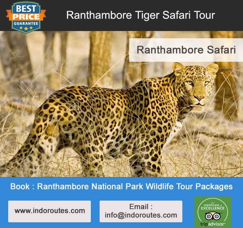 Ranthambore National Park Wildlife Tour Packages
