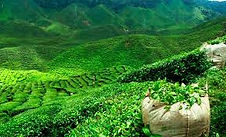 north east tour packages from aizawl, north east india tour packages