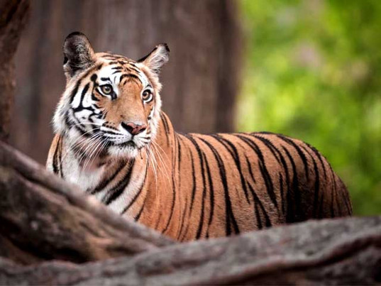 Ranthambore Wildlife Tour.jpg
