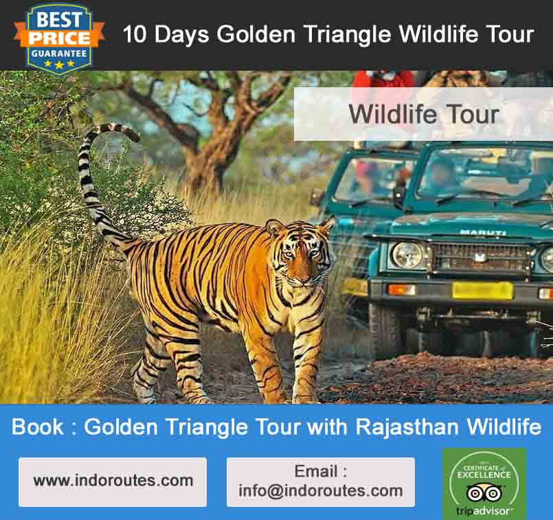 9 nights 10 days golden triangle tour with wildlife
