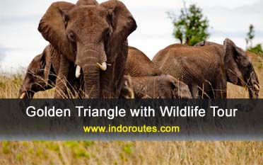 Golden Triangle with Wildlife Tour, Golden Triangle with Wildlife Tour