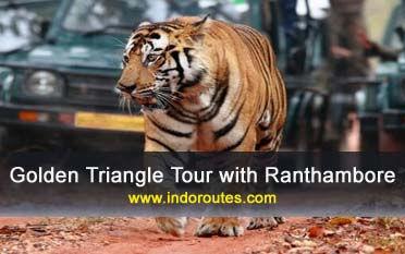 Triángulo de oro con Ranthambore