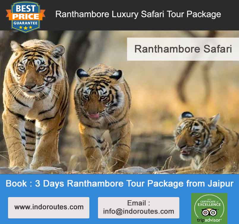 3 Days Ranthambore Tour Package from Jaipur
