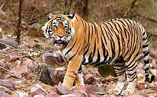south india wildlife tour from Bangalore, best forest safari in south india