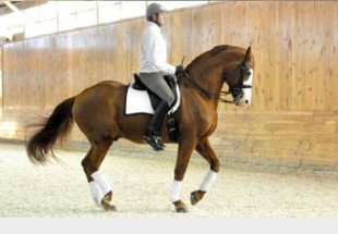 Eurodressage article on Aspire Farm