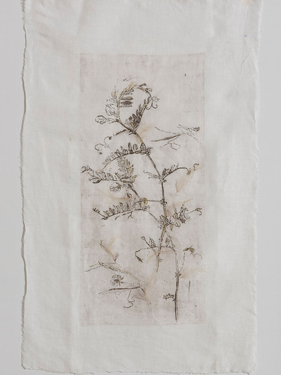 Botany/2016/Etching Natural feathers/85x55 cm