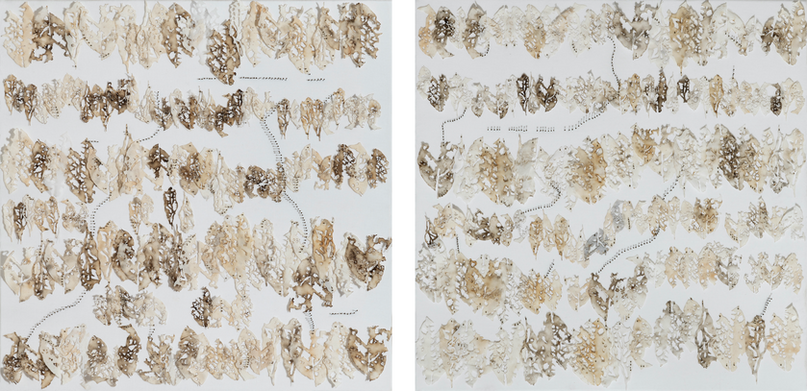 Entomological I & II/2020/ Paper, silk and entomological pins/ 50x50 cm