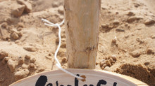 ◇ツアー中止◇あなたの木を沙漠に植える『my tree♪』