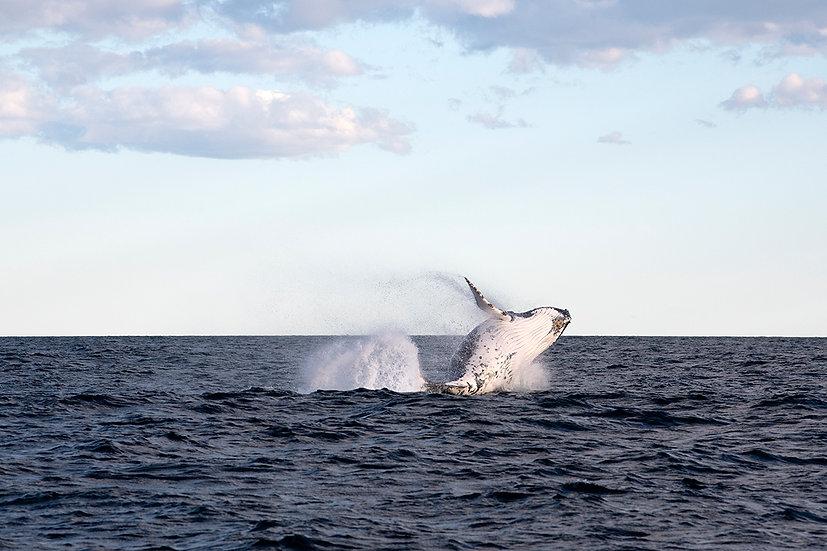 Whale #9