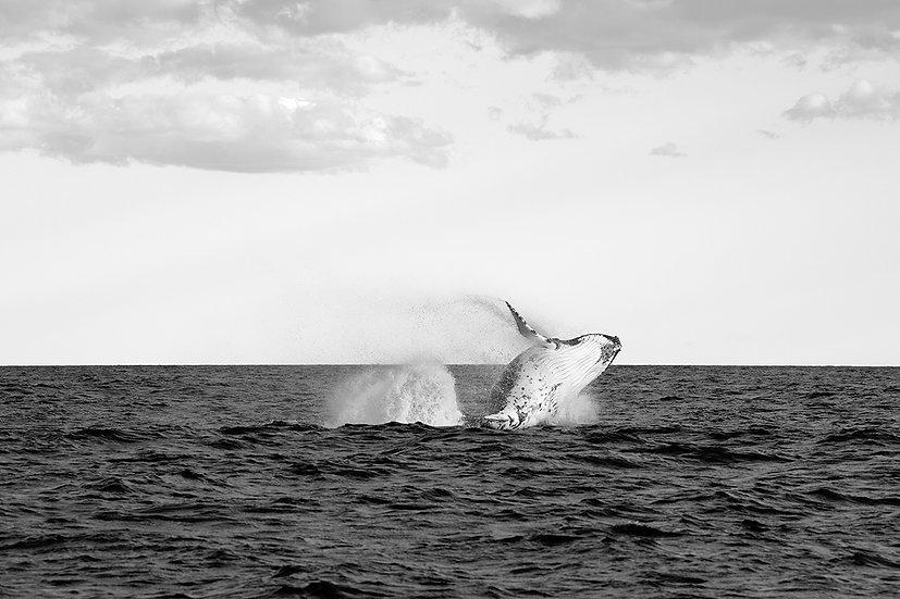 Whale #5